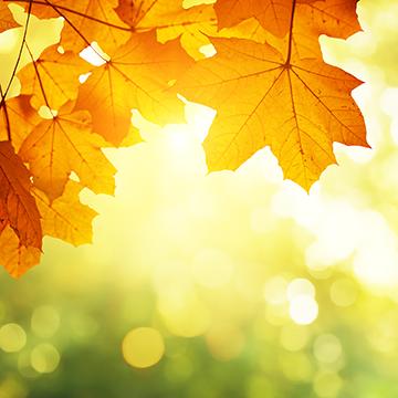 Vitamin D Day – November 2nd